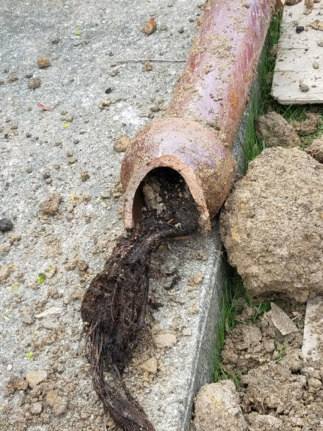 tree roots in sewer pipes
